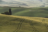 Italy, Tuscany, Val D'Orcia, Pienza. Tuscan Field with Sheep Photographic Print by Walter Bibikow