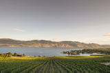 Vineyard and Okanagan Lake at Quails' Gate Winery, Kelowna, Bc, Canada Reproduction photographique par Michael DeFreitas
