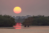 Sunrise, Mangroves and Water, Merritt Island Nwr, Florida Photographic Print by Rob Sheppard
