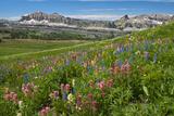 Alaska Basin Wildflower Meadow, Caribou -Targhee Nf, WYoming Photographic Print by Howie Garber
