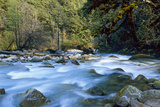 River and Forest, Jigme Dorji National Park, Bhutan Photographic Print by Howie Garber