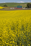 Canola Field and Red Barn, Palouse Country, Washington, Usa Photographic Print by Charles Cecil