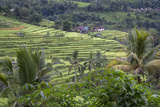 Terraced Rice Paddies, Village in Distance. Jatiluwih, Bali, Indonesia Photographic Print by Charles Cecil