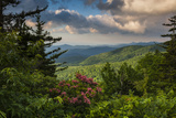 Mountain Laurel, Sunrise, Beacon Heights, North Carolina Photographic Print by Howie Garber