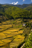Rice Fields around Harvest Time in Paro Valley, Bhutan Photographic Print by Howie Garber