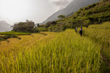 Walking Through the Terraced Rice Fields. Vietnam, Indochina Photographic Print by Tom Norring