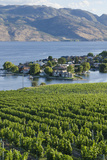 Vineyard and Okanagan Lake at Quails' Gate Winery, Kelowna, Bc, Canada Photographic Print by Michael DeFreitas