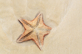 Caribbean, Anguilla. Close-Up Shot of Starfish in Sand Photographic Print by Alida Latham