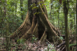Trinidad. Close-Up of Tree Trunk at Asa Wright Nature Centre Photographic Print by Alida Latham