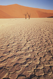 Namibia, Sossusvlei Region, Dry Sand Dunes at Desert Photographic Print by Gavriel Jecan