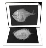 Tropical Hatchetfish & Long-Spine Porcupinefish Set Poster by Sandra J. Raredon