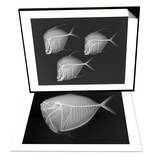 Lookdown & Moonfish Set Print by Sandra J. Raredon