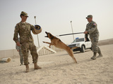 U.S. Air Force Soldier Takes a Bite from a Military Working Dog Photographic Print