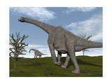 Brachiosaurus Dinosaurs Walking in an Open Field Prints