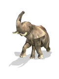 Elephant on White Background with Drop Shadow Posters