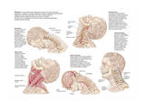 Medical Chart Showing the Range of Injuries to the Human Neck Caused by Whiplash Prints