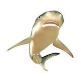 Tiger Shark Premium Giclee Print