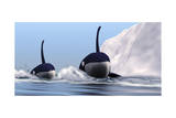 Two Orca Whales Pass Near an Iceberg in the North Arctic Ocean Posters