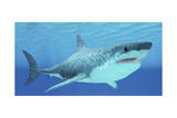Great White Shark Swimming Underwater Posters