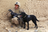 A U.S. Marine Dog Handler and His Dog on Patrol in Afghanistan Photographic Print