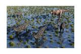 Tyrannosaurus Rex Chasing a Herd of Parasaurolophus Dinosaurs Print
