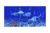 A Group of Blue Marlin with Two Siamese Tigerfish Anda Basket Star Print