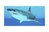 Great White Shark Swimming Underwater Prints