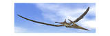 Pteranodon Dinosaur Flying in the Blue Sky Posters