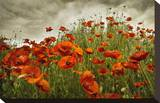 Bobbi's Poppies Stretched Canvas Print by David Winston