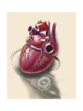 Posterior View of Human Heart on Photo of Blood Pressure Cuff Poster