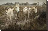 White Horses Stretched Canvas Print by David Winston