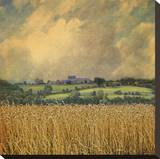 Picardy Wheat Stretched Canvas Print by Dawne Polis
