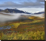 Fog over tundra, Tombstone Range, Tombstone Territorial Park, Yukon, Canada Stretched Canvas Print by Tim Fitzharris