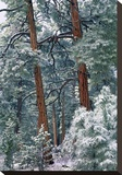 Ponderosa Pine forest after fresh snowfall, Rocky Mountain NP, Colorado Stretched Canvas Print by Tim Fitzharris
