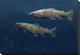 Rainbow Trout pair swimming underwater Stretched Canvas Print by Tim Fitzharris