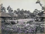 Iris Garden in Horikiri, Tokio Photographic Print