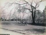 View of Uyeno, Tokio Photographic Print