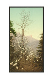 Dogwood Blossoms Giclee Print