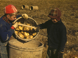 Children Gathering Potatoes on a Large Farm, Vicinity of Car Photographic Print