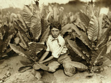 10 Yr Old Picker on Gildersleeve Tobacco Farm. Photographic Print