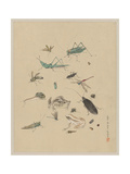 Frogs, Snails, and Insects, Including Grasshoppers, Beetles Giclee Print