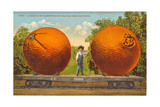 A Carload of Mammoth Navel Oranges from California Giclee Print