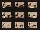 Goat, Running Photographic Print