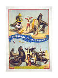 Forepaugh and Sells Brothers Shows Combined Giclee Print