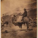 Dromedary Photographic Print