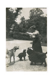 Woman with Three Dogs in a Garden Photographic Print