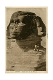 Close-Up View of Sphinx, Giza, Egypt Photographic Print