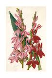Plants, Lobelia Giclee Print