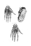 Muscles of Hand and Foot Giclee Print
