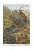 Edible Shellfish Giclee Print